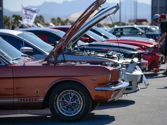 Aussies Love Mustangs Too
