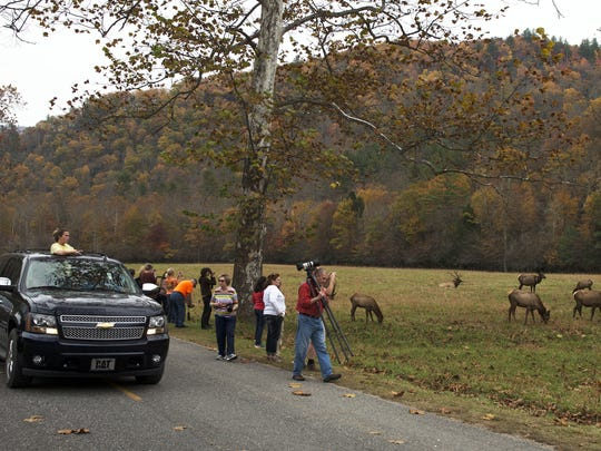 A herd of elk draws the attention of dozens of spectators near Cataloochee in the Great Smoky Mountains National Park. The U.S. Forest Service will hold a public meeting July 14 to discuss creating new habitat for the growing elk herd.