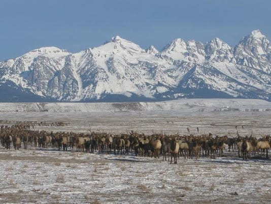 national elk refuge.jpg