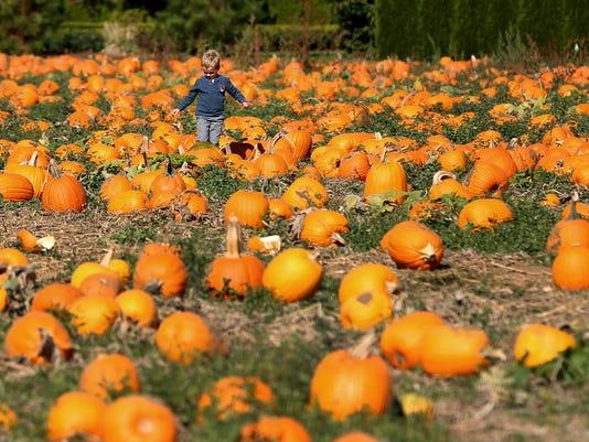Bauman's Harvest Festival