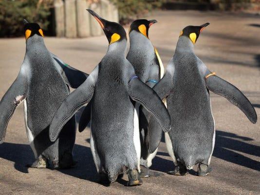 Penguins Days-10.jpg