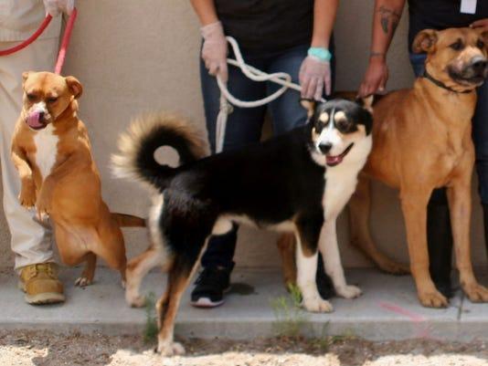 Photo 1 of dogs facing euthanasia
