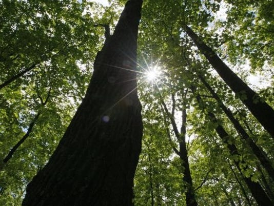636445507424352379-WDHBrd-02-19-2017-Herald-1-A005--2017-02-18-IMG-trees-1-1-F0HF85HU-L977847354-IMG-trees-1-1-F0HF85HU-1-.jpg