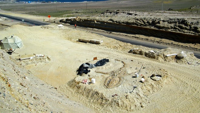 A prehistoric whale fossil lays in the Atacama desert near Copiapo, Chile. A team of Chilean and Smithsonian Institution scientists investigating the graveyard of marine mammal fossils say toxins generated by algae blooms most likely poisoned the animals millions of years ago.