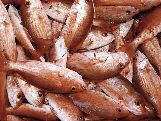 XXX D0 RED FISH  21 HOTEL CALIFORNIA A FEA MEX