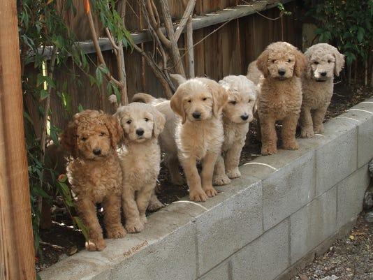 -puppies-kat-ballard-ugc-yourtake