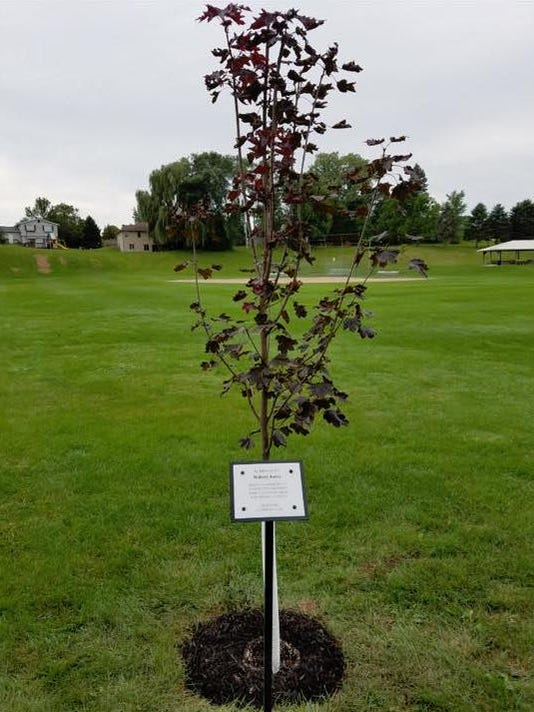 Mishicot Lion's Club tree