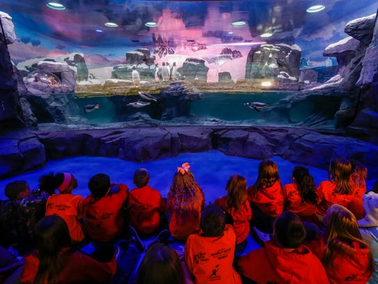 Students from the WOLF School watch as penguins swim