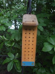 Many gardeners provide housing for mason bees, a native, solitary, stingless bee that specializes in pollinating fruit trees.