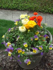 The tissue paper-like balls of ranunculus flowers work well with violas and pansies.