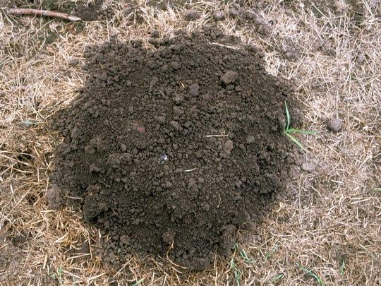 A mole mound is round.