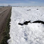Thousands of South Dakota cattle died after an early October blizzard.