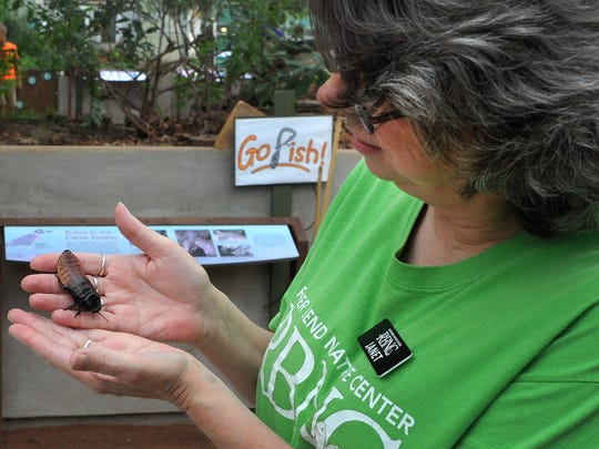 River Bend Nature Center, assistant education director, Janet Broome shows Maddy, a Madagascar Hissing Cockroach, Thursday during the center's insect day.