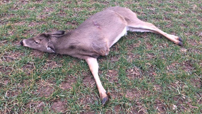 Three-legged deer found shot dead near road in Hamilton County this week.