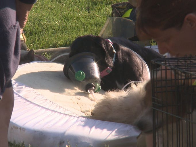 May 28, 2015: 19 pets were pulled from a house fire