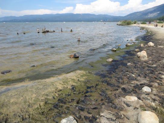 Algae growing along the south shore of Lake Tahoe in