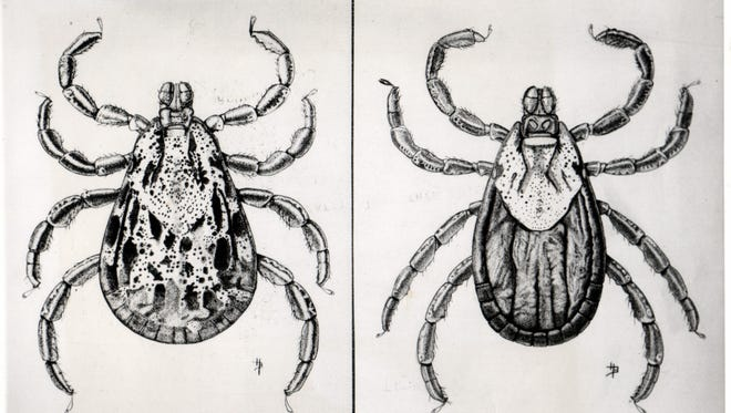 Rocky Mountain spotted fever ticks.