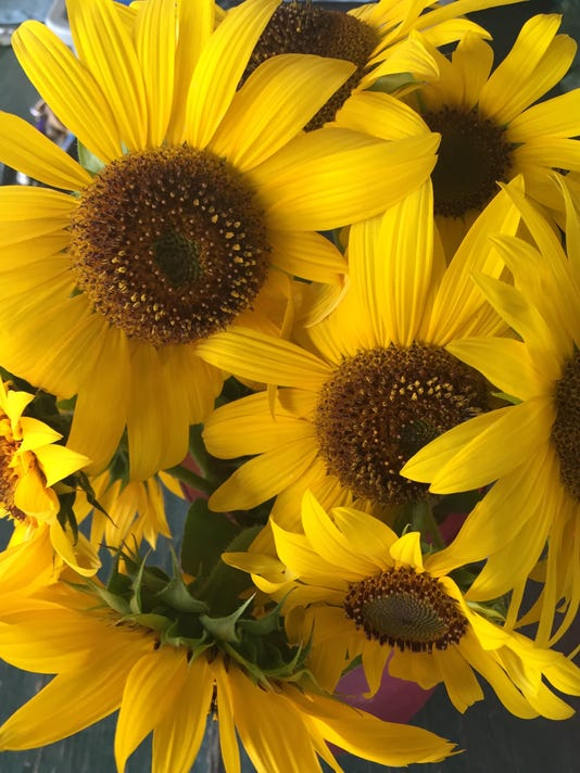 636000266132759292-sunflowers.jpg