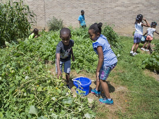 Kids at Warner Elementary School pick vegetables in the school's garden on Monday afternoon.