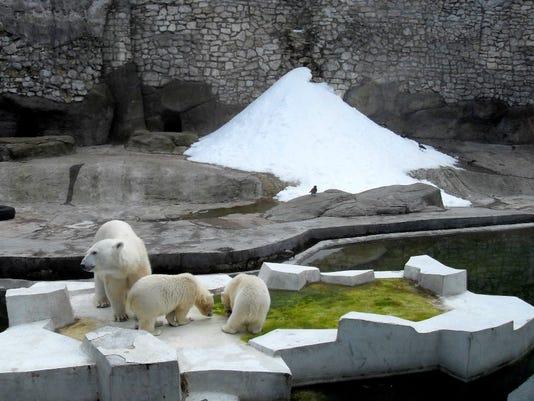 Moscow-Zoopark-polar-bears