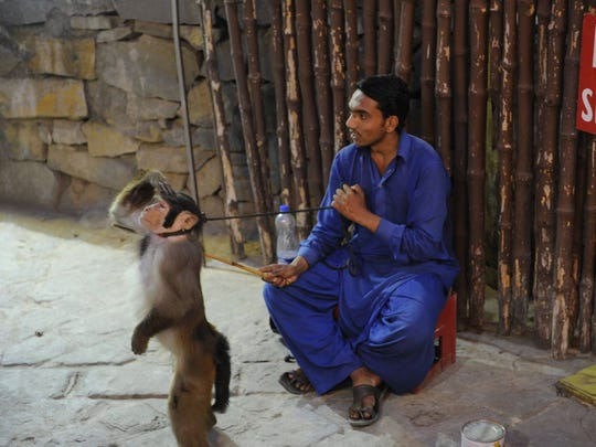 Man sits with his monkey. Islamabad, Pakistan.