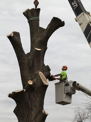 Airport officials are removing trees near Bowman Field to keep pilots safer.