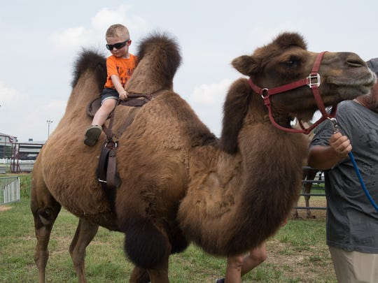 Gunner Withrow (3) of Dover rides a camel during the Delaware State Fair in Harrington.