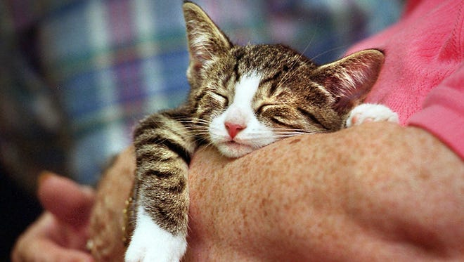 A Manhattan assemblywoman is pushing a bill that would outlaw cat declawing unless medically necessary and impose a $1,000 fine on anyone performing the surgery. But the state Veterinary Medical Society is opposed to the measure, fearing it would cause more  euthanizations of cats.
