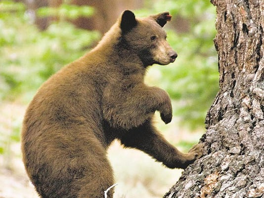 635687849855846326-mr-bear