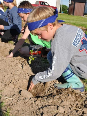 Kids dig during one of the gardening sessions at AgriVenture at Memory Lane Farm in Marshfield.
