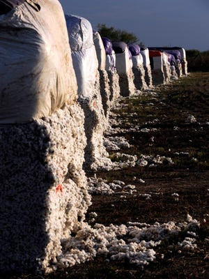 Cotton modules sit in the yard at Farmer's Cooperative Gin in Stamford Nov. 10, 2015. The traditional block-shaped modules are giving way to smaller, round ones as farmers embrace new technology.