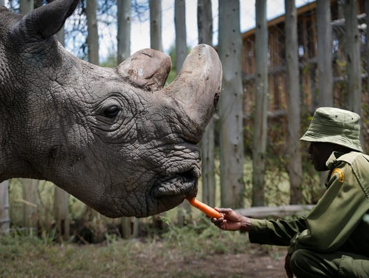 EPA (FILE) KENYA NORTHERN WHITE RHINO EXTINCTION ENV CONSERVATION KEN