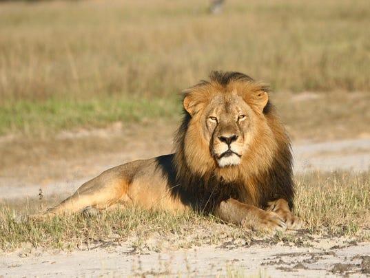 AP ZIMBABWE LION KILLED I ZWE