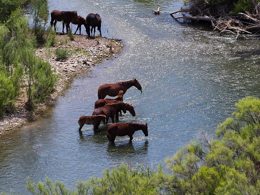 Wild horses to be removed from Tonto National Forest in Arizona