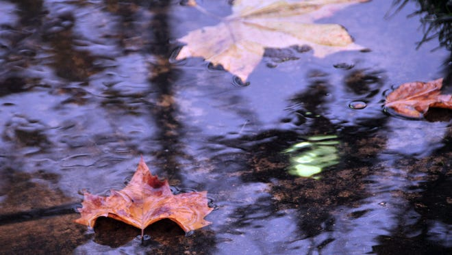 Fallen leaves grace a pool of water on a Creekbridge sidewalk during Thursday early morning rains in Salinas.