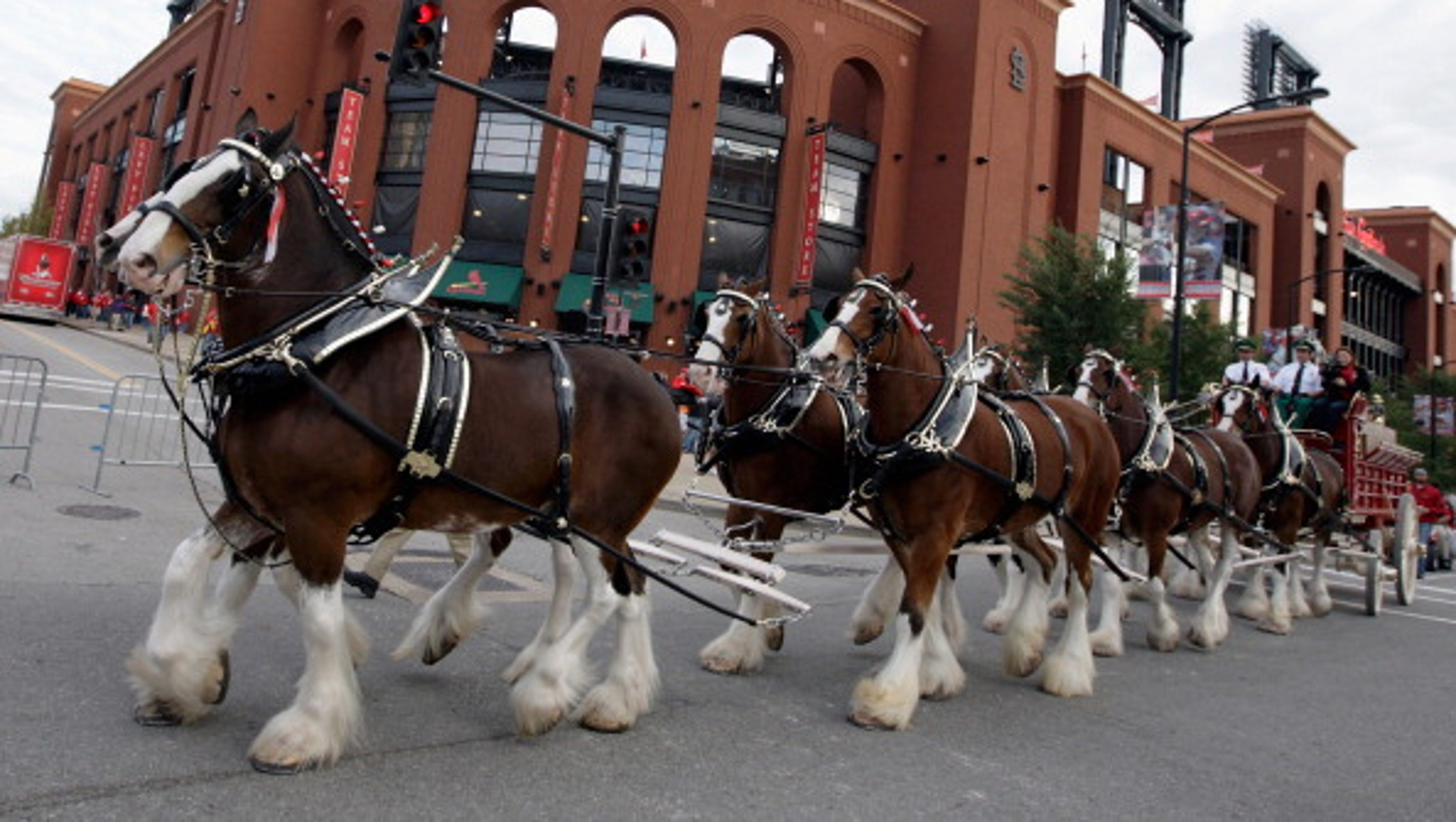 Clydesdale Horses in Snow Budweiser Clydesdales in SnowBudweiser Clydesdales In Snow