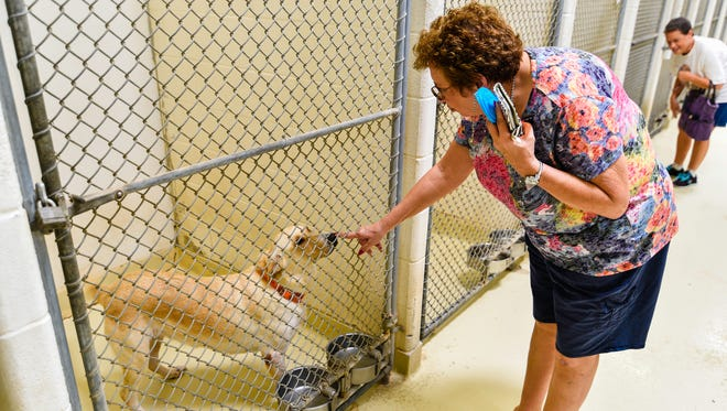 """Diane Fraley says """"Hi"""" to Goldy as Julie Coats checks out some other dogs in the kennel at the San Angelo Animal Shelter."""