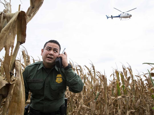 Border Patrol Agent Marcelino Medina standing in a cornfield is given direction from a helicopter above as he tries to cut off an unauthorized entrant in Mission, Texas.
