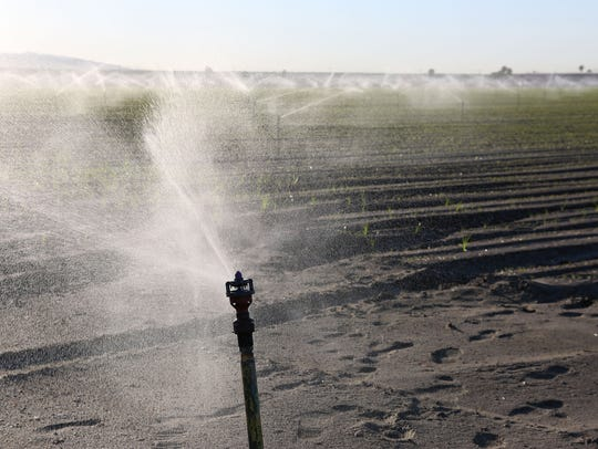 Sprinklers irrigate a field near Fillmore Street and
