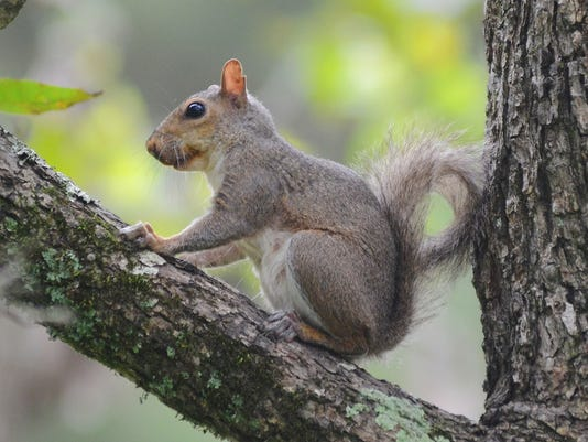 0914squirrel01.jpg