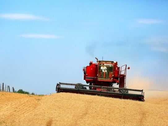 A combine harvests wheat along the Oregon-Washington