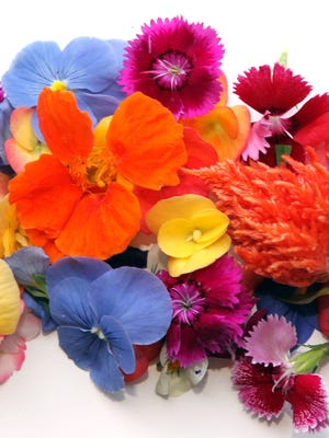A selection of edible flowers grown by Waterfields, a hydroponic microgreens business. The company has expanded its operation into a 3,500-square-foot space in the West End. The company was founded in Lower Price Hill in 2013.