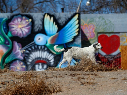 A dog takes itself for a walk along U.S. Highway 64 Monday in Shiprock.