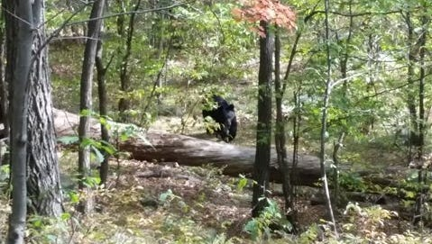 In this Sept. 21, photo taken by hiker Darsh Patel and provided by the West Milford Police Department, a bear approaches 22-year-old Patel in New Jersey's Apshawa Preserve. Patel was mauled to death by the bear shortly after the photo was taken.