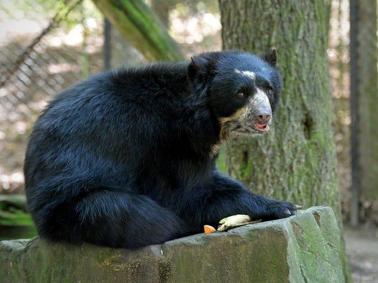 sby 0510 Zoo bear 2487.jpg