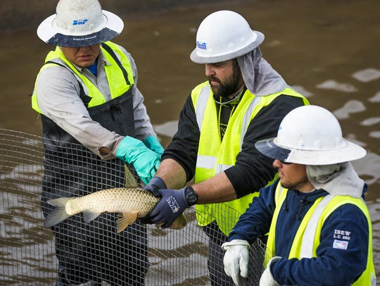 A Salt River Project worker holds a fish taken from
