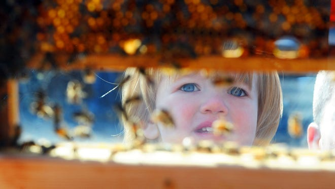 Juna Thompson of Staunton looks at a cutaway bee hive at the Shenandoah Valley Beekeepers table at Earth Day Staunton.