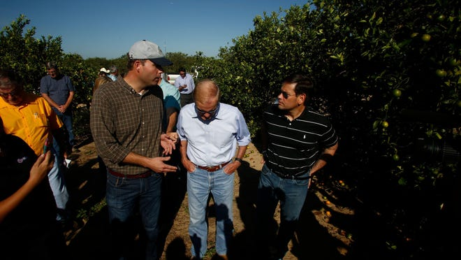 Senators Bill Nelson, center, and Marco Rubio, right, tour the Story Grove orange grove in Lake Wales on Sept. 13.