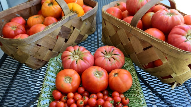 These tomatoes are from Rusty Edmonds' garden last summer.
