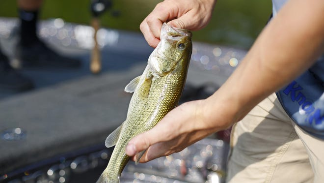 A bass caught by an angler at Hoover Reservoir in June 2018